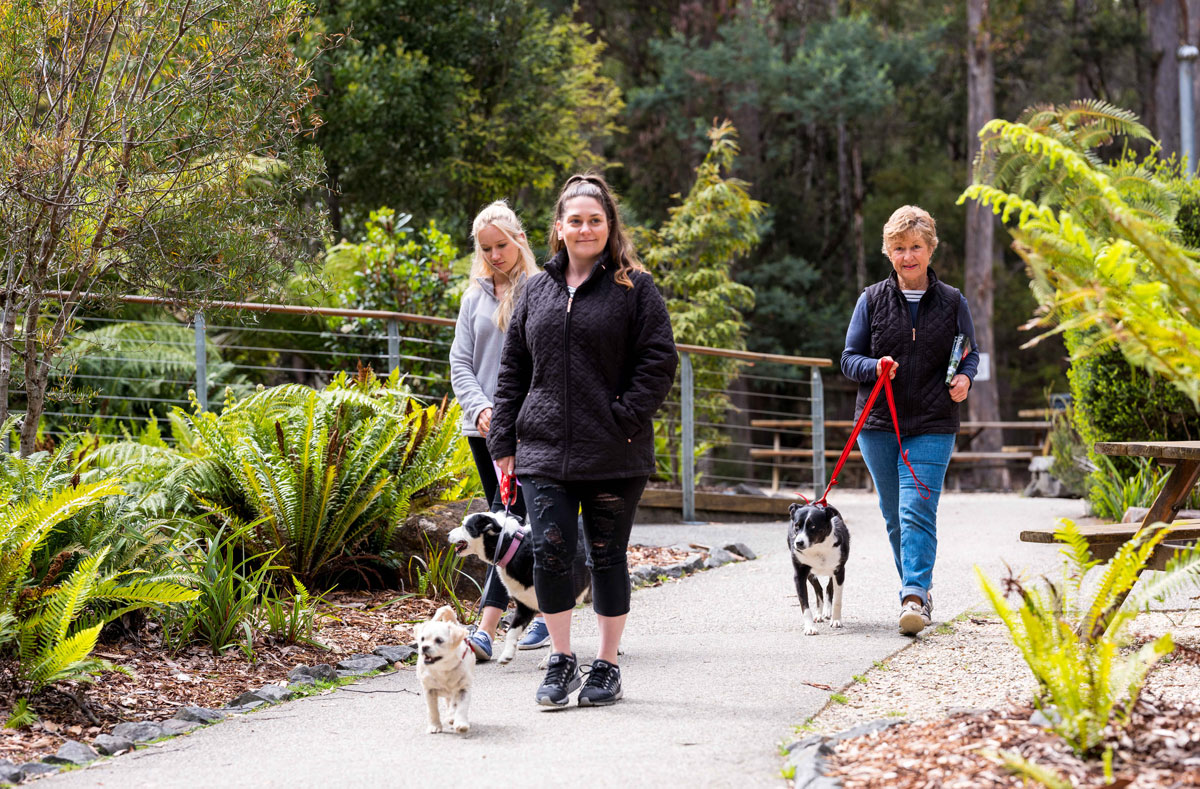 Take your furry friend to the treetops at Tahune Adventures