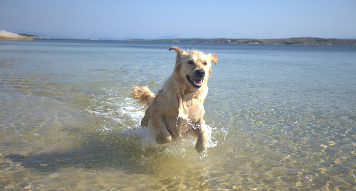 Let your dog frolic on one of the pristine beaches